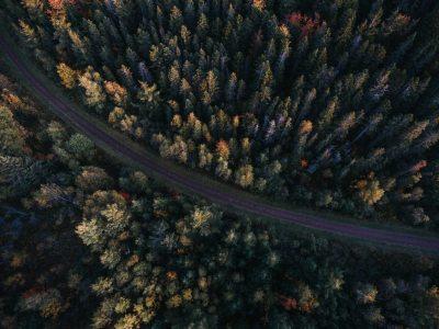 overhead woods